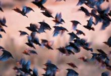 أنواع من الطيور قادرة على إلحاق الدمار بالبيئة