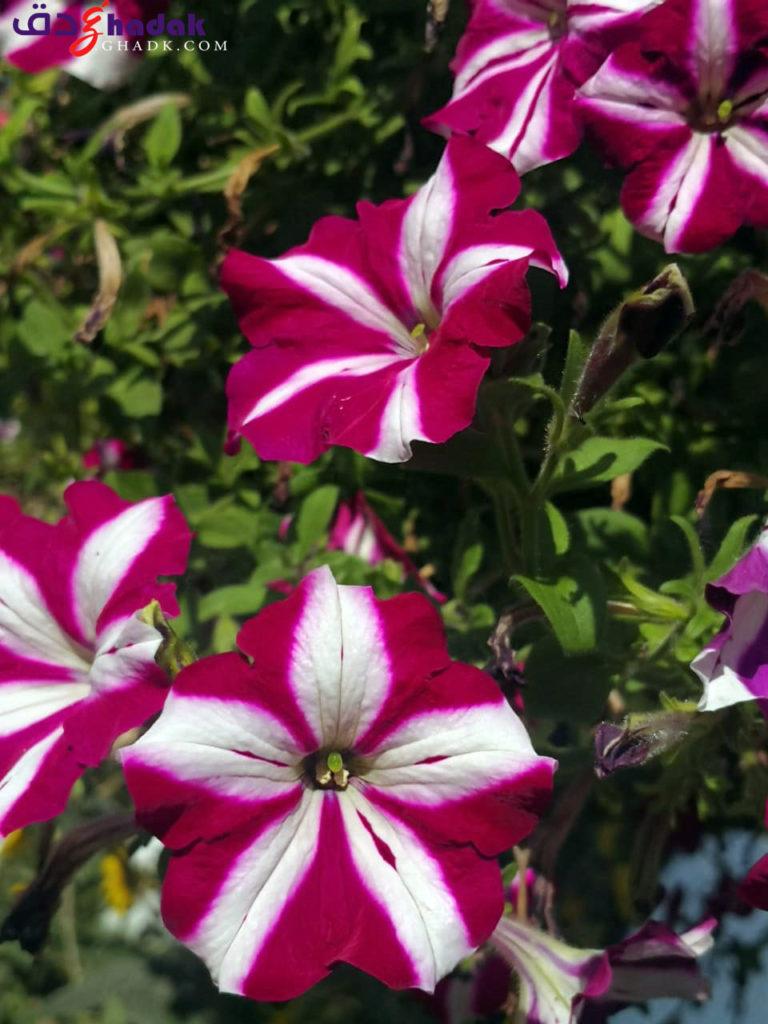 حديقة الزهور دبي