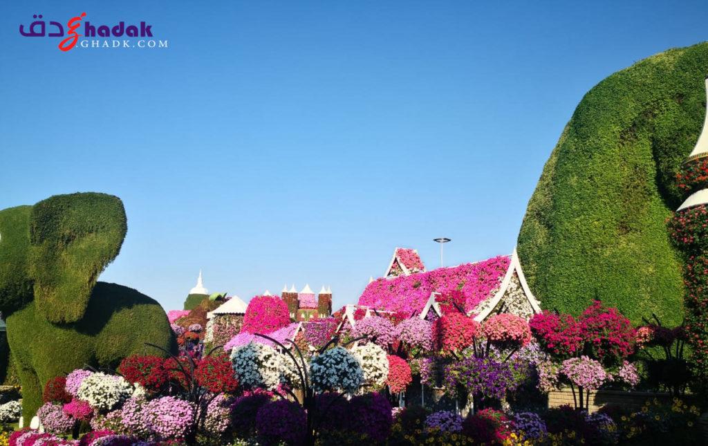 الزهور المنتشرة في حديقة دبي الرائعة