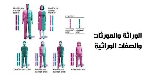 الوراثة والمورثات والصفات الوراثية