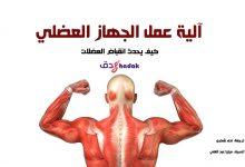 صورة الجهاز العضلي آلية عمله بالتفصيل