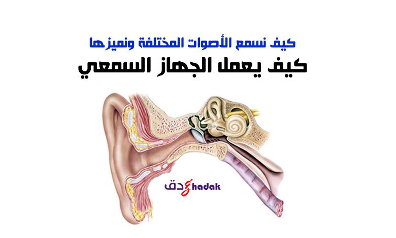 الجهاز السمعي
