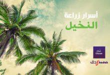 أسرار زراعة النخيل في البلاد العربية