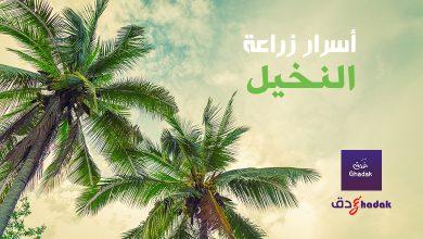 صورة أسرار زراعة النخيل في البلاد العربية