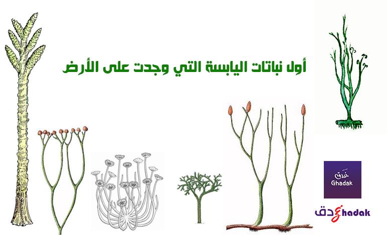 أول نباتات اليابسة التي وجدت على الأرض
