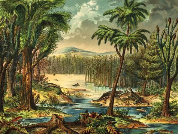 أول نباتات اليابسة والحفريات النباتية السيليسية