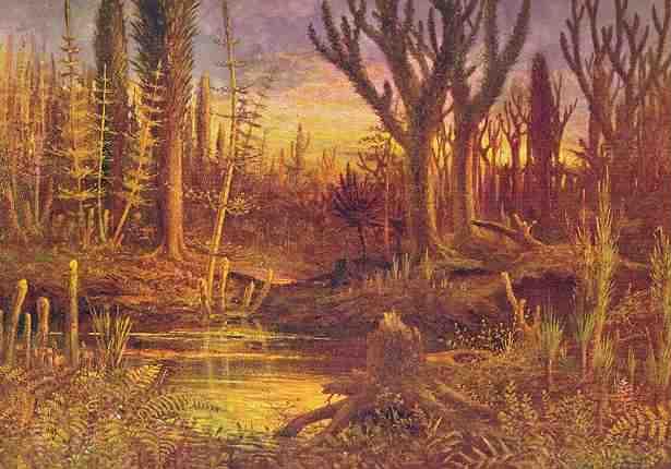أول نباتات اليابسة صورة لنبات عاش في العصر الكربوني
