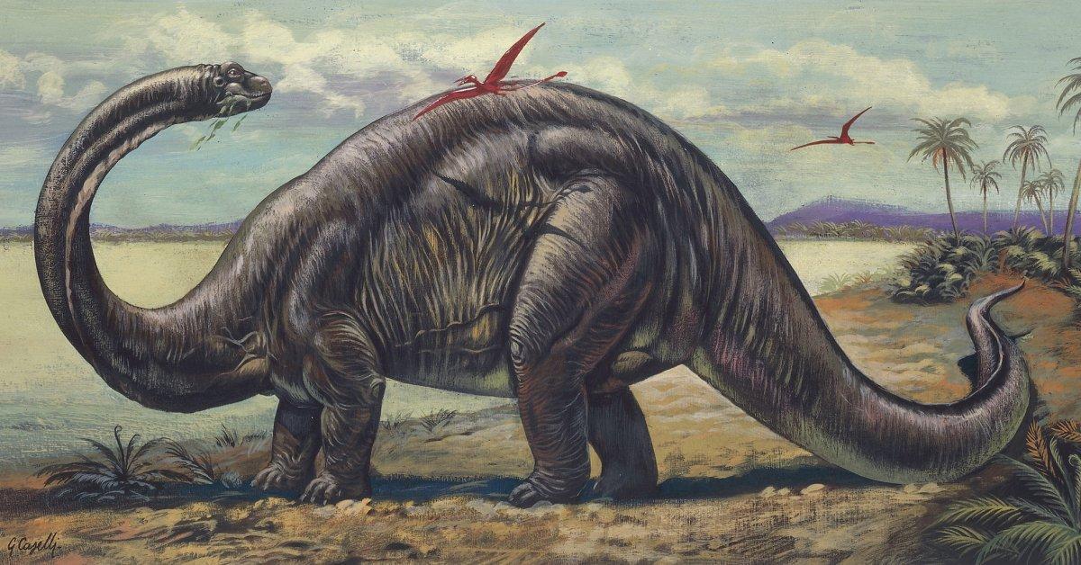 البرونتاسوروس Brontosaurus أشهر ديناصورات