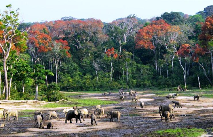 الغابة الاستوائية الإفريقية