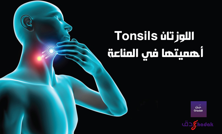 اللوزتان Tonsils أهميتها في المناعة