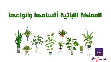 صورة المملكة النباتية أقسامها وأنواعها