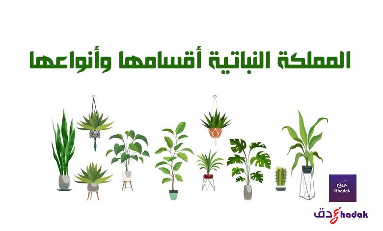 المملكة النباتية أقسامها وأنواعها