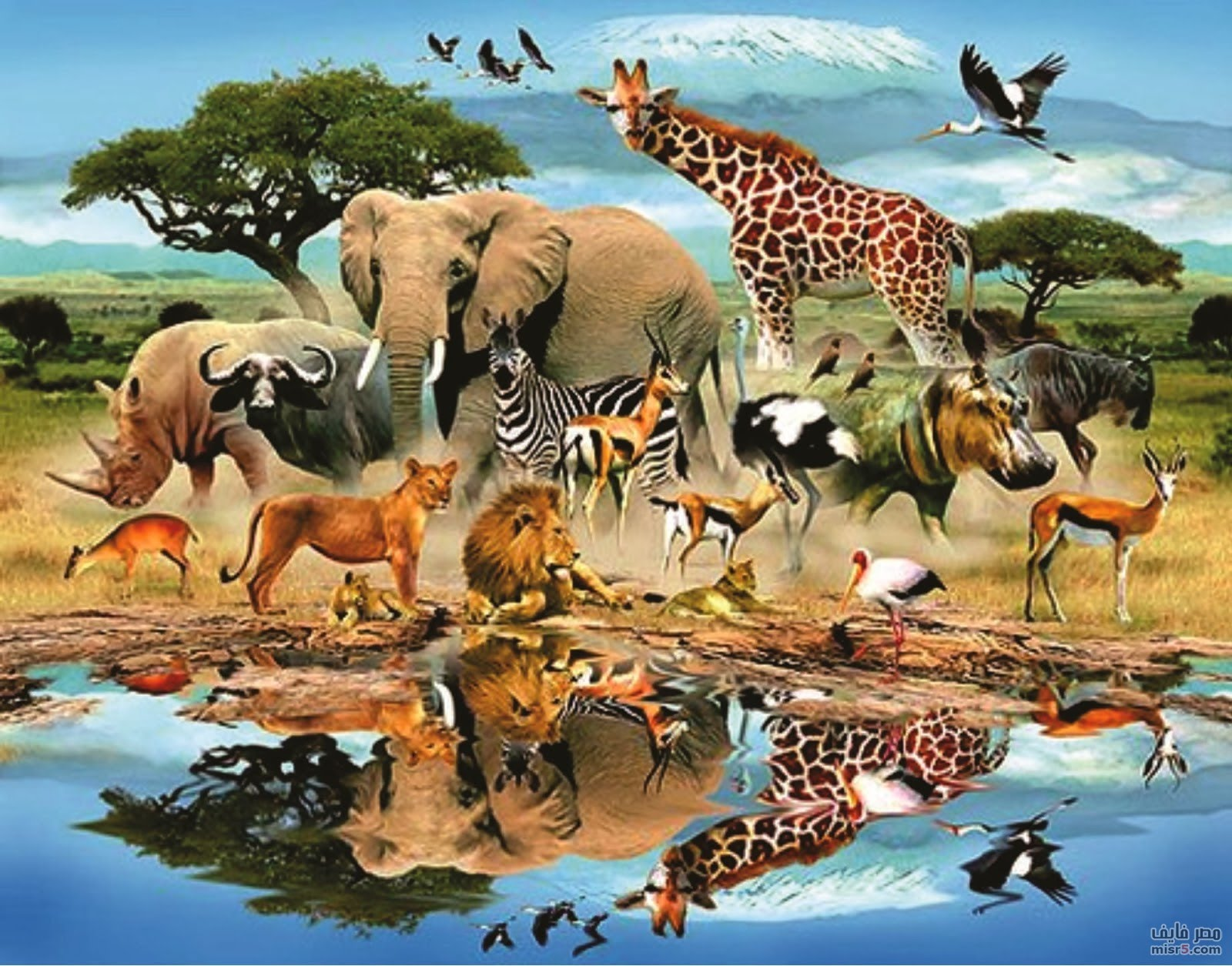 تصنيف المملكة الحيوانية