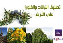 صورة تصنيف النباتات والفلورا في العالم بالصور