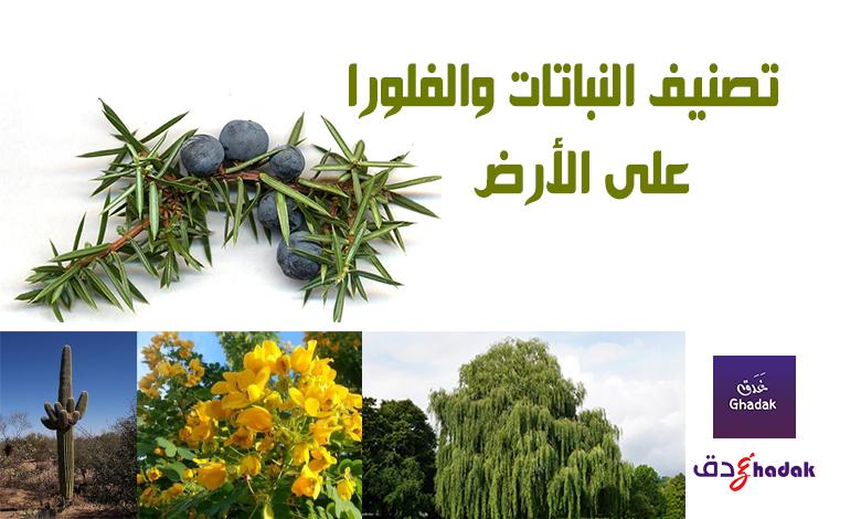 تصنيف النباتات والفلورا على الأرض