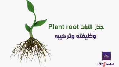 صورة جذر النبات Plant root وظيفته وتركيبه