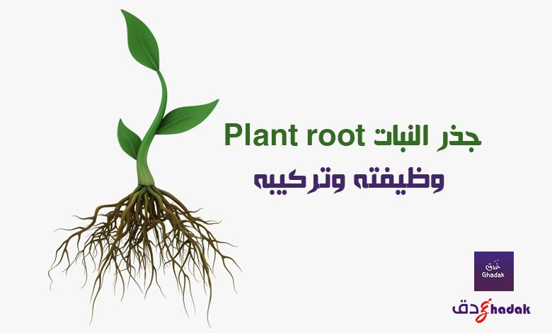 جذر النبات Plant root وظيفته وتركيبه