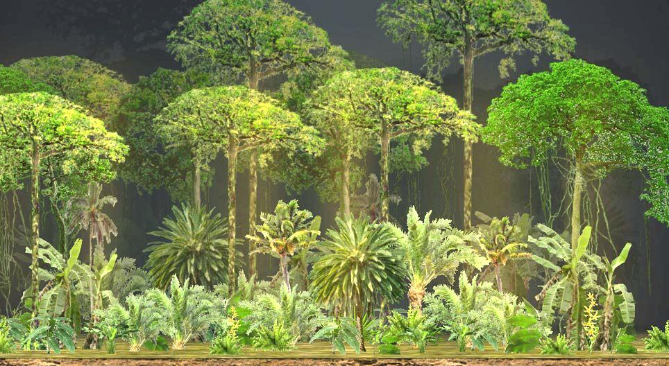 تصنيف النباتات والفلورا في المناطق الحارة الرطبة