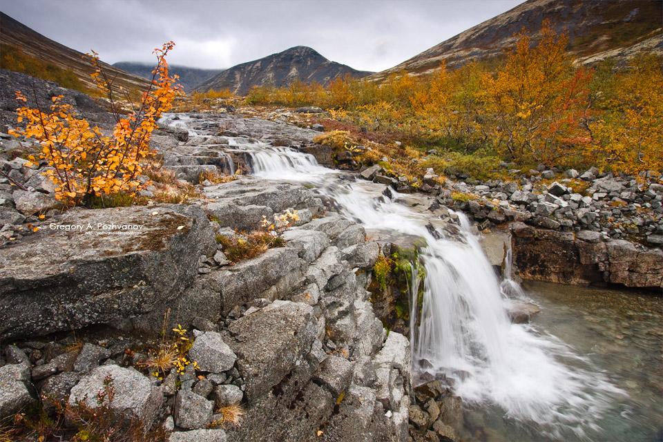 فلورا في المناطق القطبية والجبلية