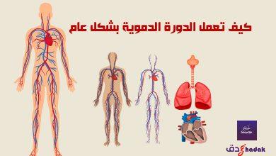 صورة كيف تعمل الدورة الدموية بشكل عام