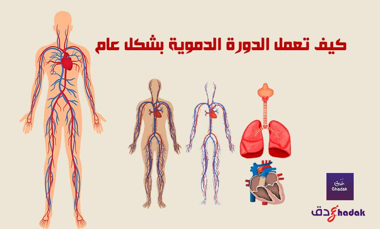 كيف تعمل الدورة الدموية بشكل عام