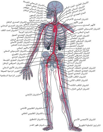الجزء الرئيسي للجهاز العصبي