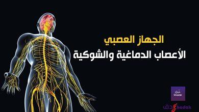 الجهاز العصبي - الأعصاب الدماغية والشوكية