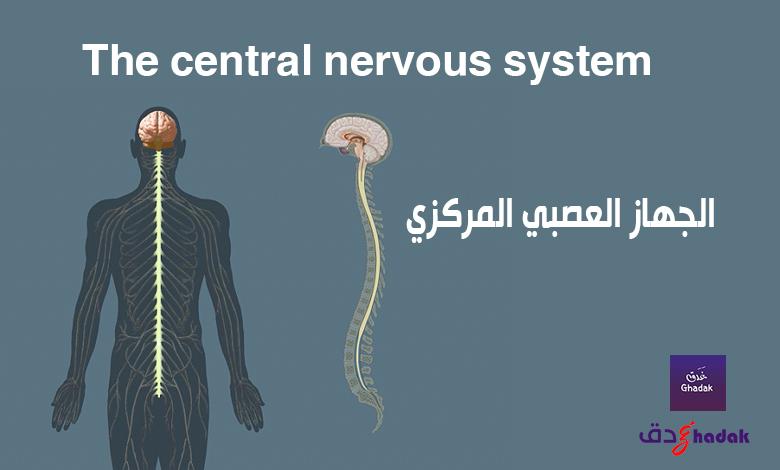 الجهاز العصبي المركزي The central nervous system