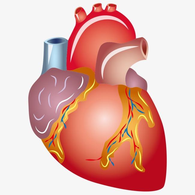 القلب البشري صورة خلفية