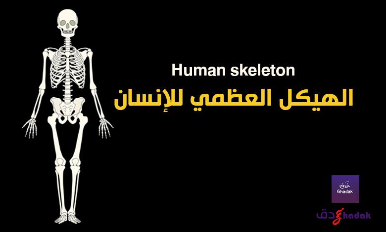 الهيكل العظمي للإنسان Human skeleton