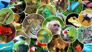 انتشار حيوانات ونباتات أوروبا