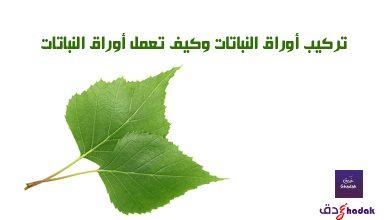 تركيب أوراق النباتات وكيف تعمل أوراق النباتات