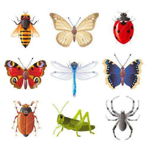 تصنيف الحشرات الأقسام الرئيسية