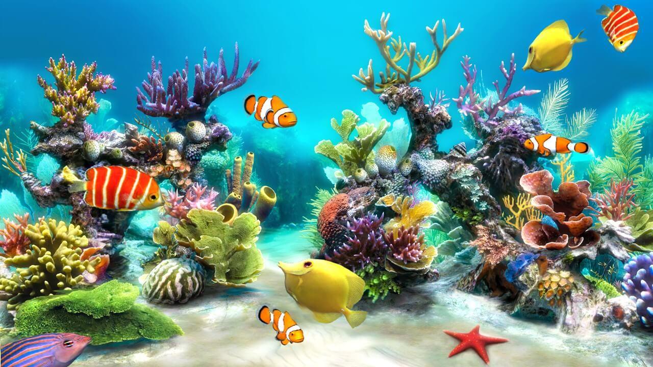 حقائق عن الكائنات البحرية