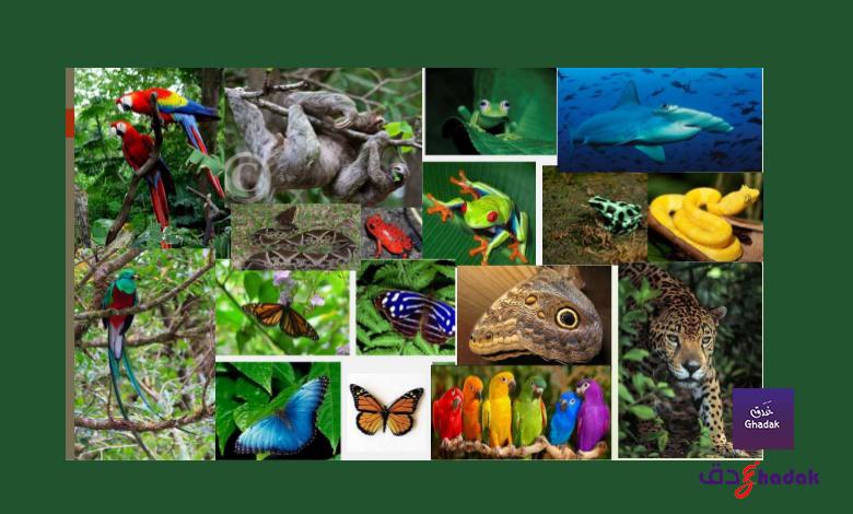 حيوانات ونباتات أوروبا