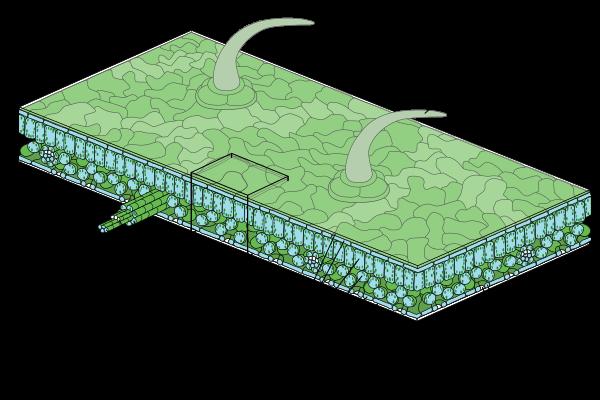كيف تعمل أوراق النباتات