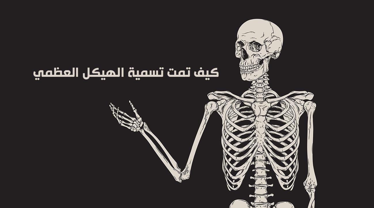 كيف تمت تسمية الهيكل العظمي