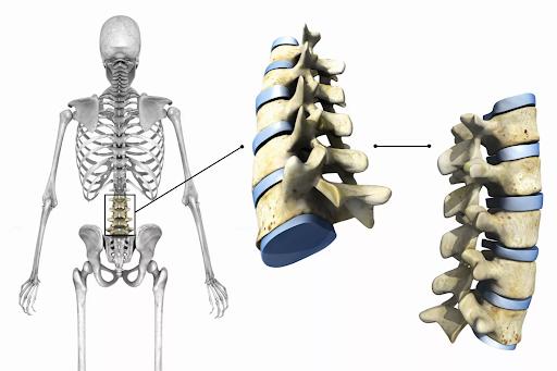 ما هي مفاصل جسم الانسان