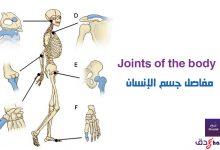مفاصل جسم الانسان Joints of the body
