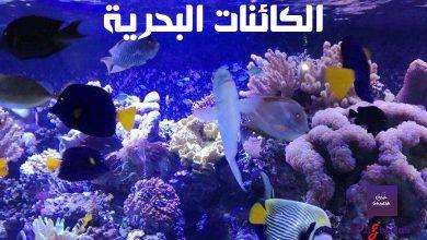 7 معلومات وحقائق عن الكائنات البحرية وعظمتها