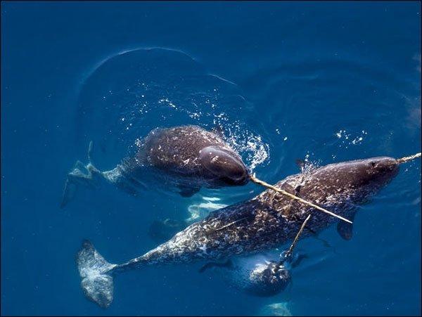 الحوت وحيد القرن