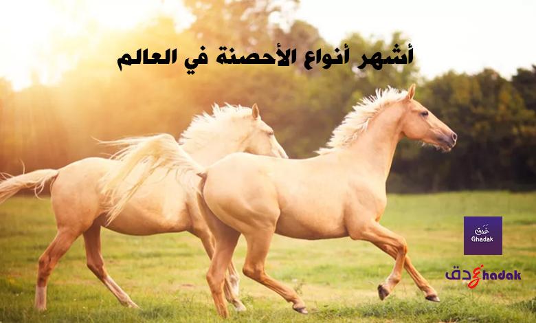 10 من أشهر أنواع الأحصنة في العالم