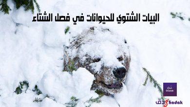 البيات الشتوي للحيوانات في فصل الشتاء