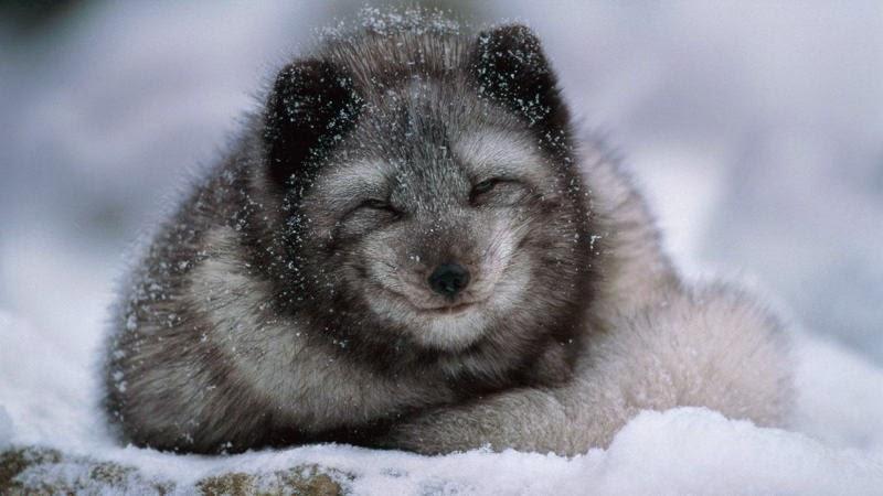 البيات الشتوي للحيوانات