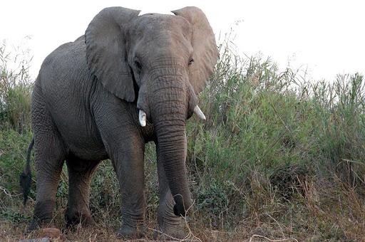 الحياة البرية في أفريقيا