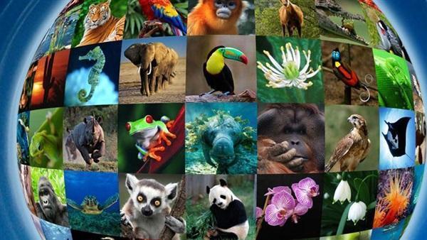الحياة البرية وتهديد الانقراض