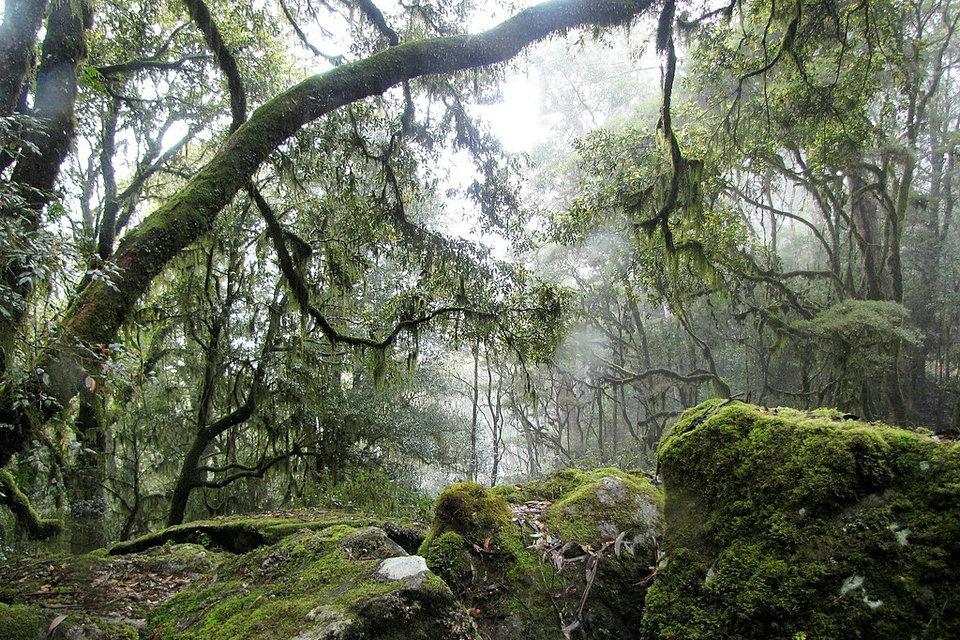 الغابات الاستوائية