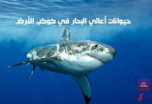 حيوانات أعالي البحار في كوكب الأرض