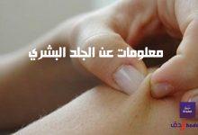 معلومات عن الجلد البشري