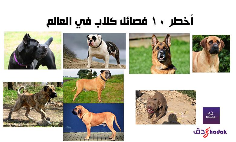 أخطر 10 فصائل كلاب في العالم